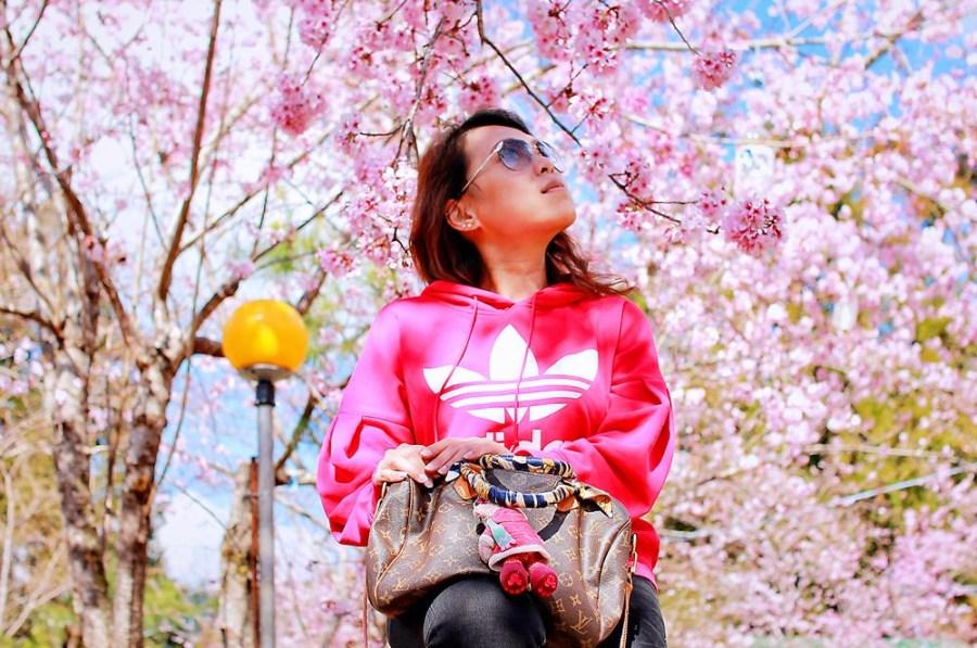 桃園旅遊景點/復興拉拉山恩愛農場,每年必追的粉色櫻花季,彷彿置身在日本賞櫻