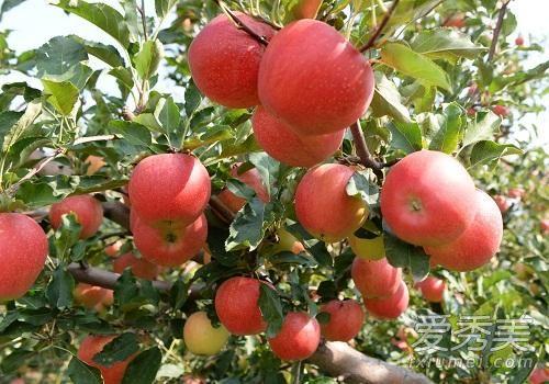 蘋果煮著吃好還是生吃好 蘋果煮著吃有什麼好處 - 康途健康百科