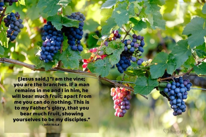 "Illustration of John 15:5,8 — [Jesus said,] ""I am the vine; you are the branches. If a man remains in me and I in him, he will bear much fruit; apart from me you can do nothing. This is to my Father's glory, that you bear much fruit, showing yourselves to be my disciples."""