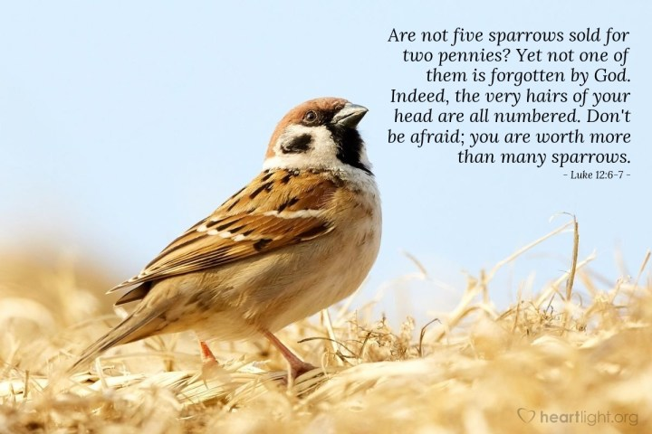 Illustration of Luke 12:6-7 — Are not five sparrows sold for two pennies? Yet not one of them is forgotten by God. Indeed, the very hairs of your head are all numbered. Don't be afraid; you are worth more than many sparrows.