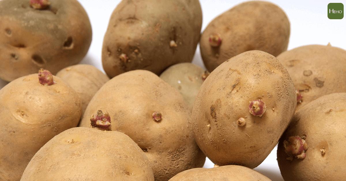 這7種會發芽的食物有幾種不能吃?看你答對幾個 | Heho健康