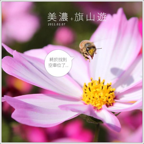 【旅遊】高雄美濃區|美濃花海與客家擂茶一日遊