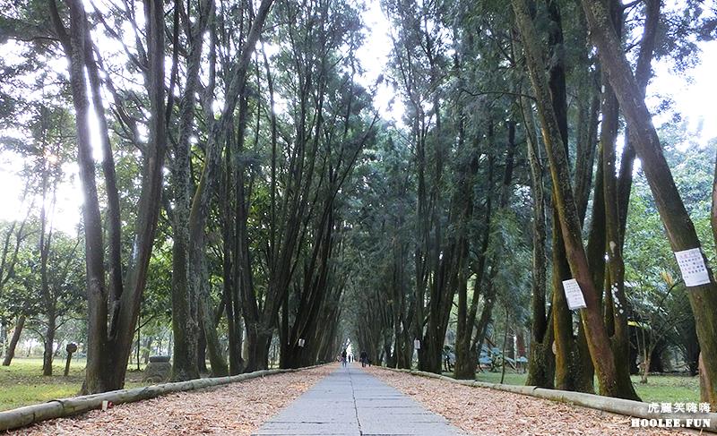 【旅遊】南投|彷彿漫步於歐洲林蔭大道★竹山超美景★下坪自然教育園區享受森林浴