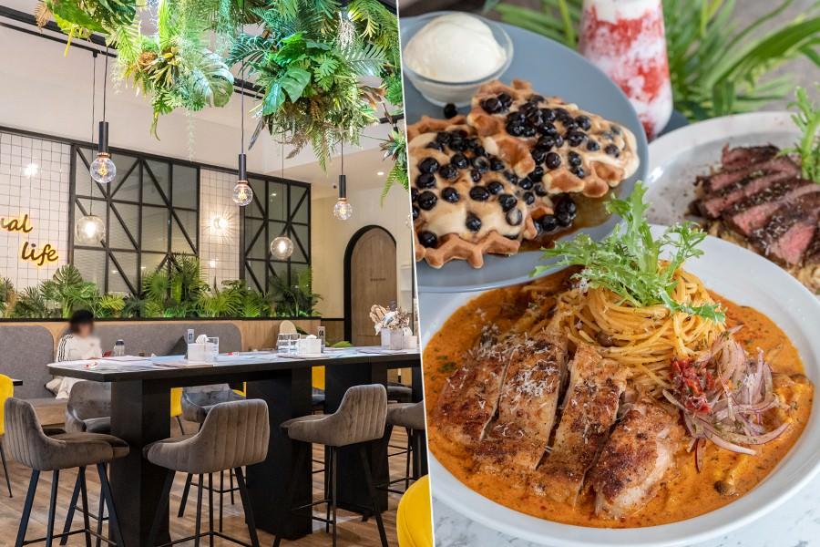 夏佐廚房(高雄)叢林風約會聚餐必訪!泰式紅咖哩椰汁雞義大利麵,甜食推薦珍珠奶茶蜂巢鬆餅