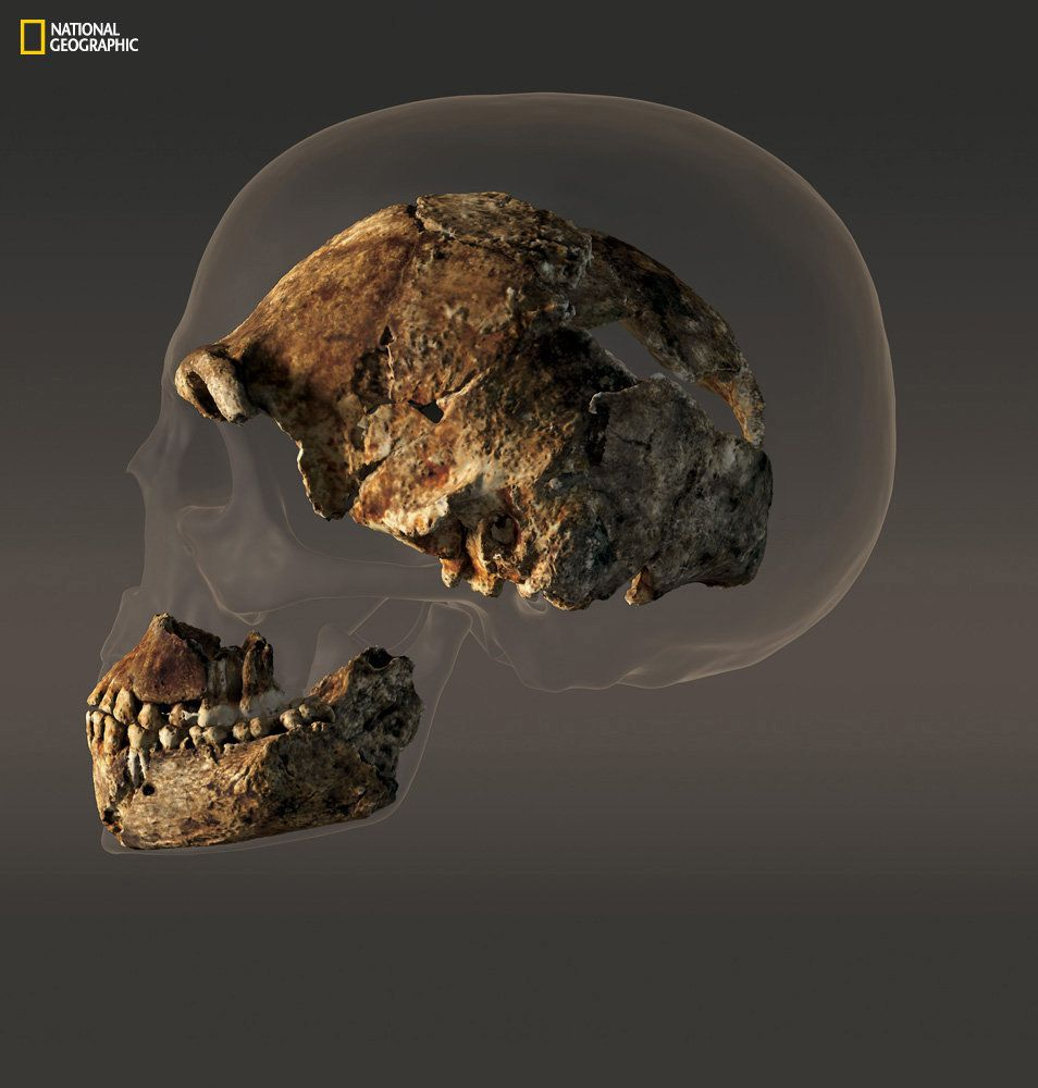 """<span class='image-component__caption' itemprop=""""caption"""">The braincase of a composite male skull of<em>H. naledi</em>thatmeasures about560 cubic centimeters in volume -- less than half that of the modern human skull pictured behind it.</span>"""