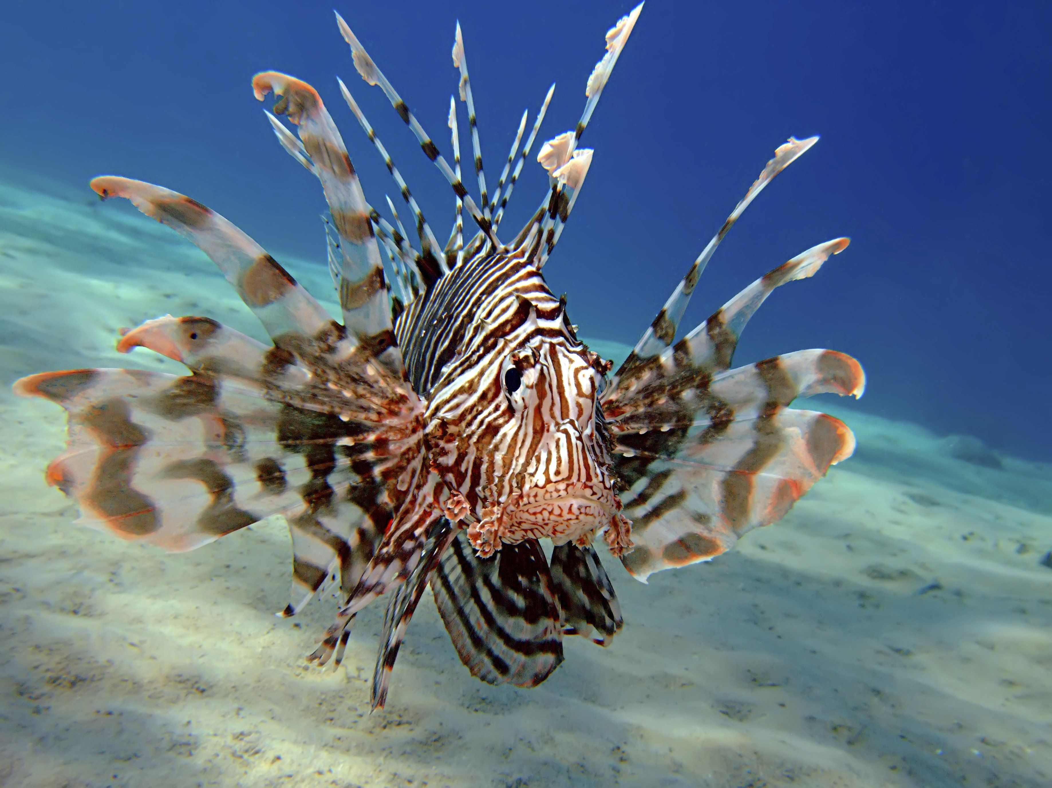 Florida Lionfish Derby Seeks To Curb Spread Of Invasive