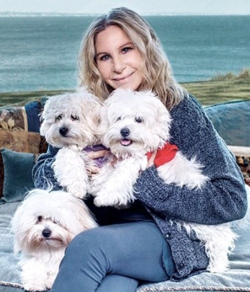 dead dog Barbra Streisand's Cloned Dead Dog Sent Twitter Into An Existential Crisis 5a9a22511e0000fb077ad580
