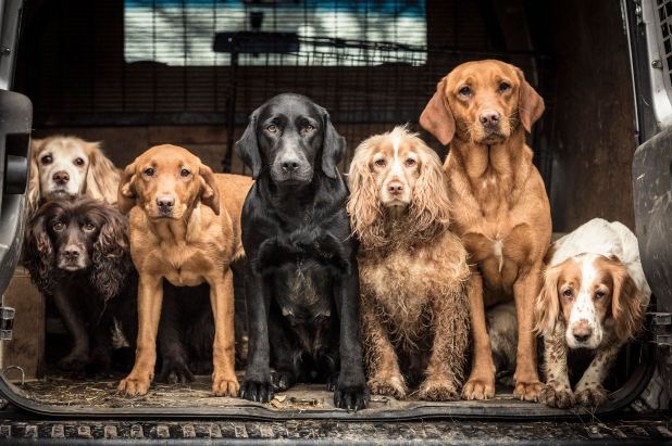 """<strong>First Place</strong><br>""""Wayne&rsquo;s Team""""<br> (Back row) Skye, age 13, lemon working cocker. (Front row) Jenny, ag"""