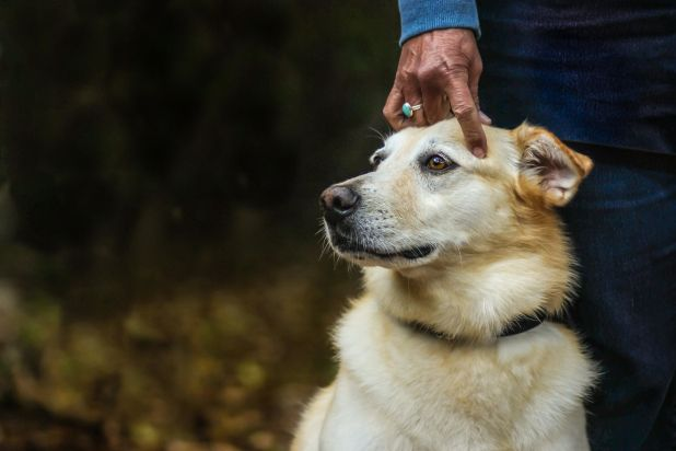 """<strong>Second Place</strong><br>""""Divine Connection""""<br>Kodi, age 10, yellow Lab/golden retriever mix, U.S."""