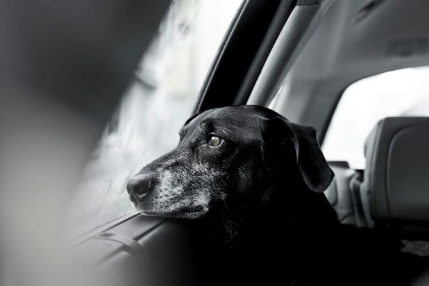 """<strong>Second Place</strong><br>""""On a Rainy Day""""<br>Nilo, crossbreed and rescue dog, Austria"""