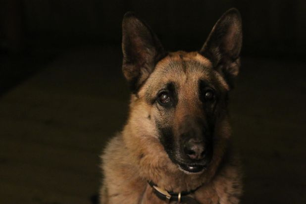 "<strong>First Place</strong><br>""My Best Friend Roxy""<br>Roxy, German shepherd, U.S.<br>Photographer Mariah Mobley is 11 year"
