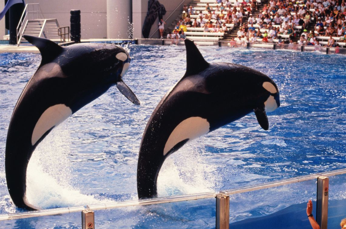 Travel firm Thomas Cook will stop selling tickets to SeaWorld from next summer, it announced on Sunday.