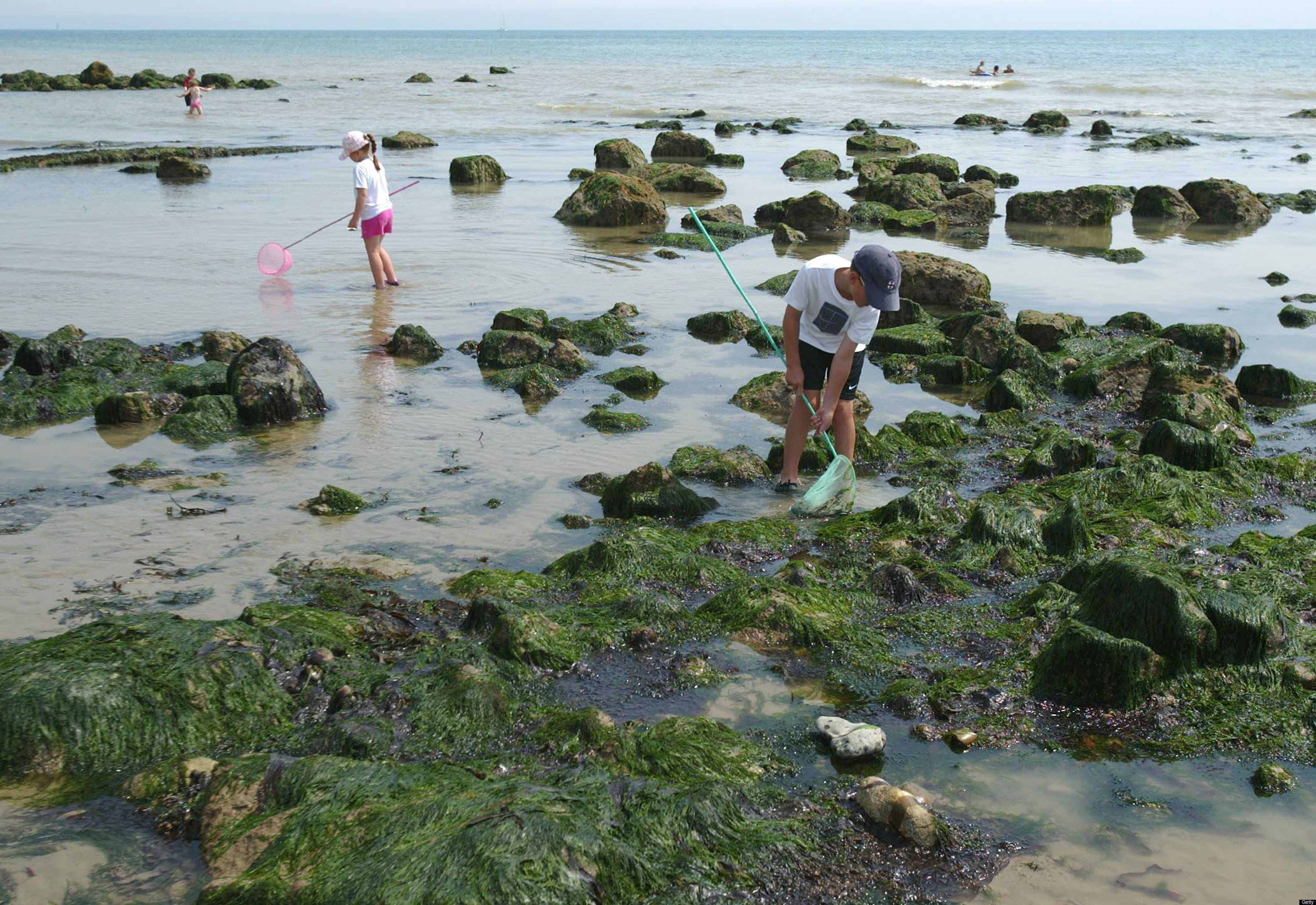 Kelp Wanted Inside America S Only Commercial Seaweed Farm Huffpost