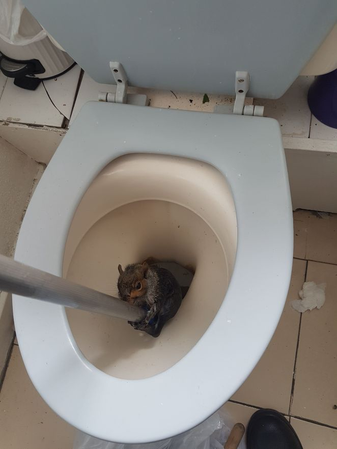 Students in London discovered this intruder in their toilet bowl in May. The squirrel clambered out after gripping onto a mop