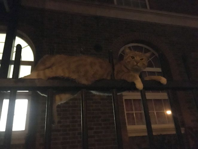 Skittles the ginger cat fell and was impaled on metal railings in London in March.London Fire Brigade crews cut the&nbs