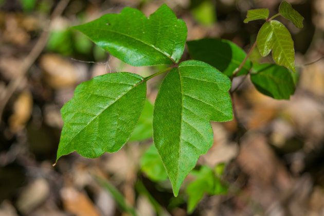 What To Do If Your Child Touches Poison Ivy | HuffPost ...