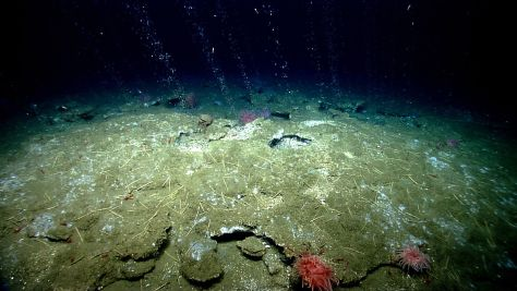 Methane bubbles out of the seafloor off the coast of Virginia, north of Washington Canyon.