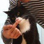 [사람 참 어려워] 처음 만난 고양이와 예의를 갖춰 친구가 되는 법