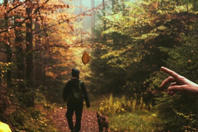 Κάθε στροφή και νέο κάδρο.Παρθένο δάσος Φρακτού, Παρανέστι