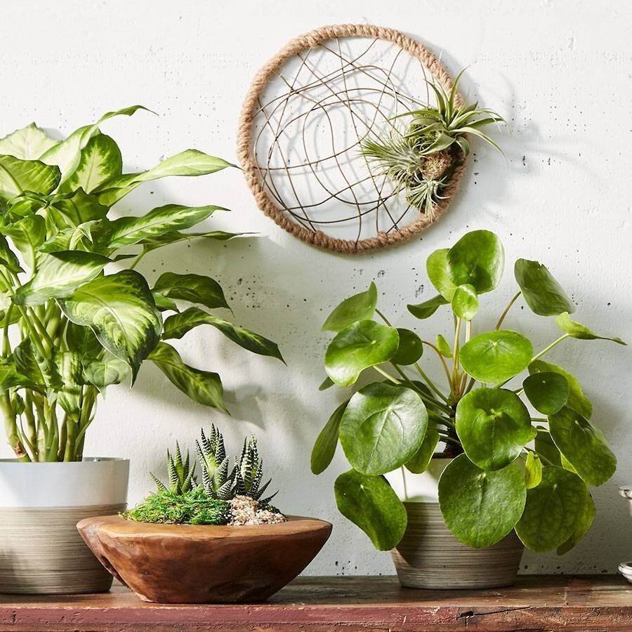 7 Underrated Places To Buy Houseplants Online Huffpost Life
