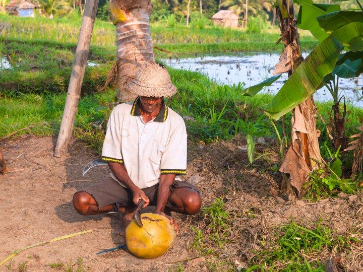 Un cultivateur de noix de coco travaille dans sa ferme à Ubud, en Indonésie.