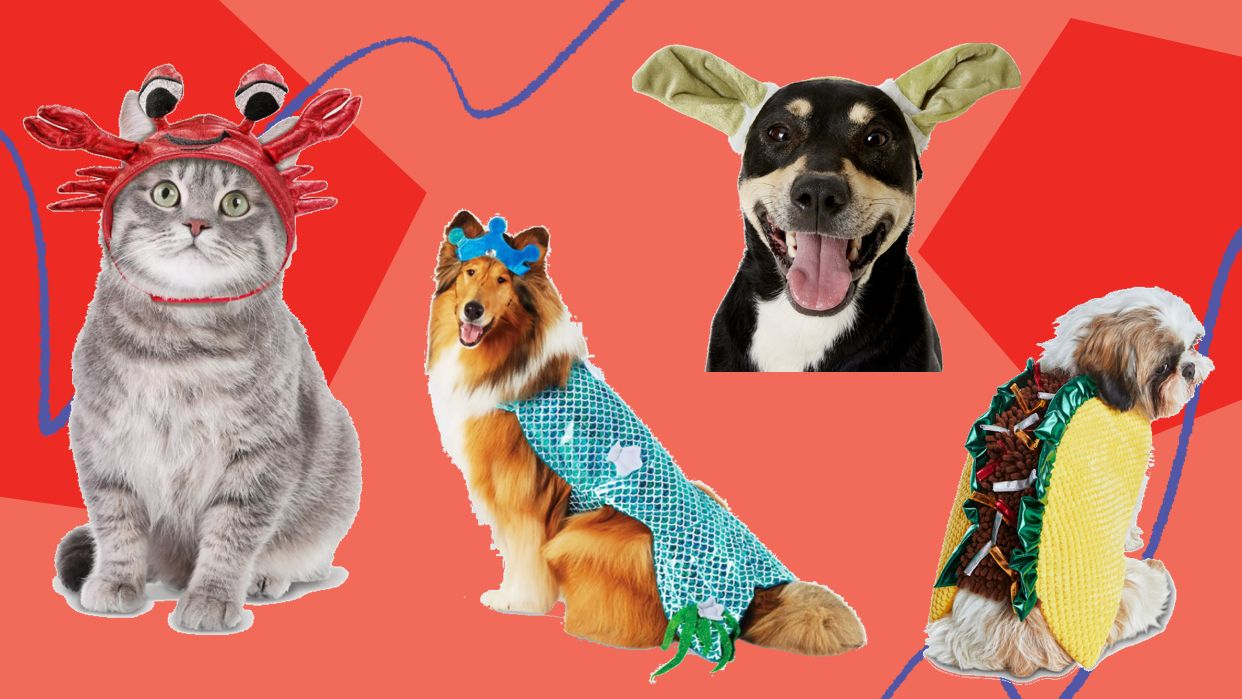 Price (low to high) price (high to low) savings … Halloween 2020 Pet Costumes For Dogs And Cats Huffpost Life