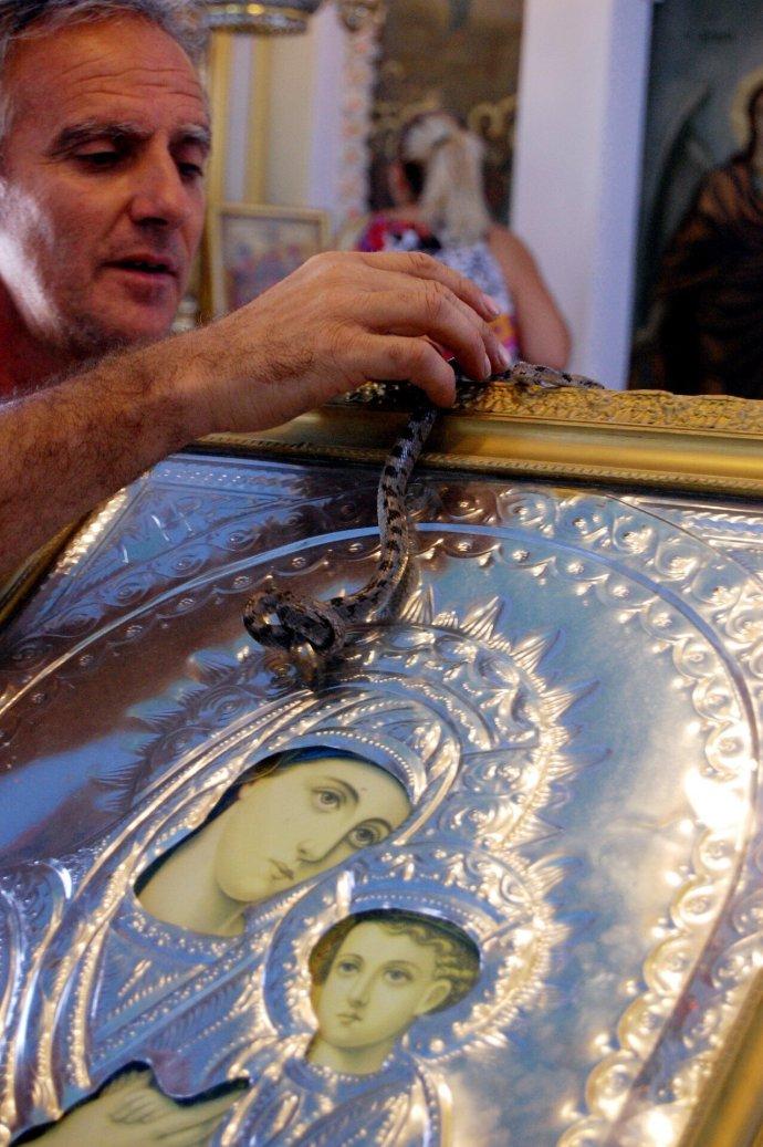 Φωτογραφία αρχείου 2008 - Κεφαλονιά , τα φιδάκια της Παναγίας, ανήμερα του Δεκαπενταύγουστου στο χωριό