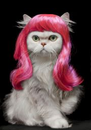 animals wearing wigs and