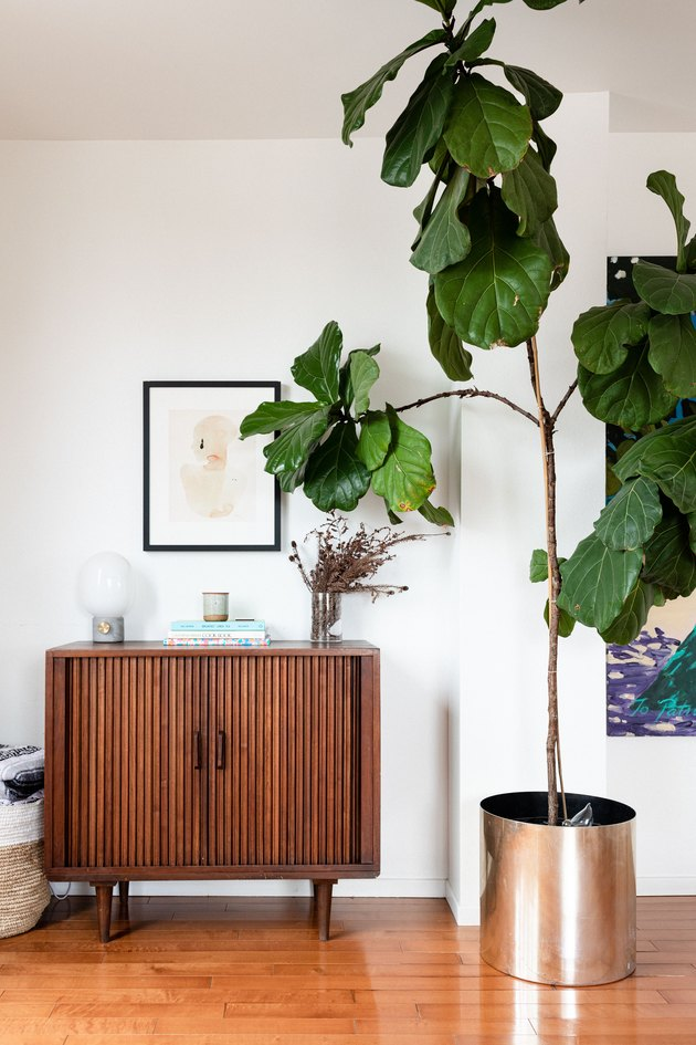 Tall plant near credenza and art
