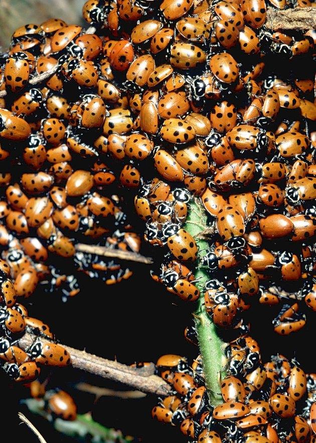 Homemade Traps for Flies & Ladybugs   Hunker