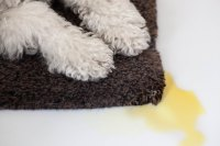 How to Get Dried Dog Urine Out of Carpet | Hunker