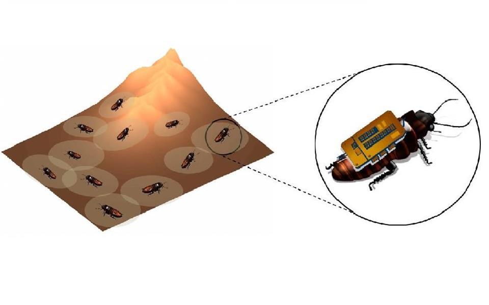 Baratas-ciborgue poderão ajudar a salvar vidas em desabamentos