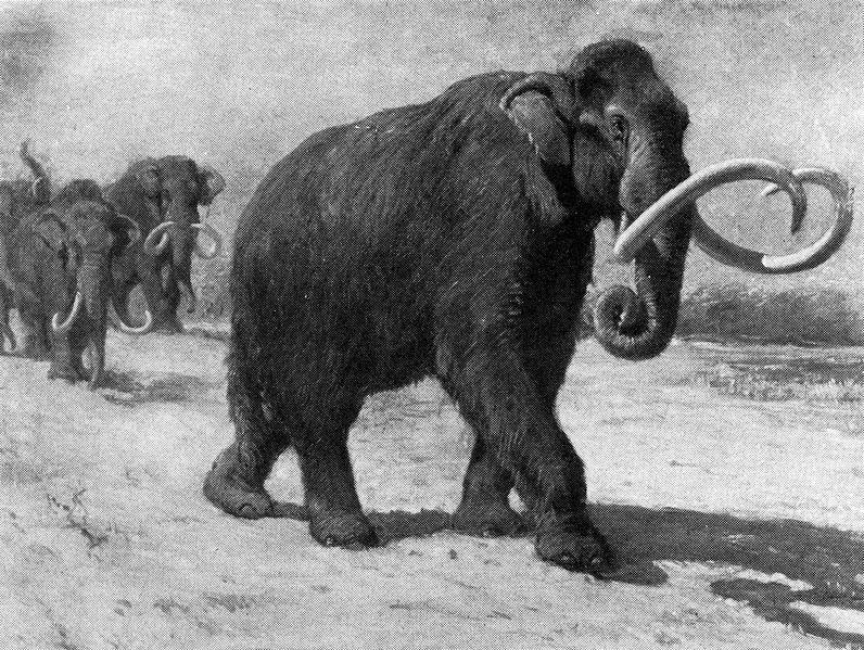 10 gigantes animais pré-históricos e assustadores