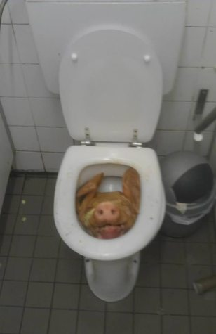 16 coisas mais bizarras já encontradas em banheiros - Mega Curioso