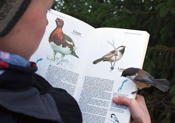 Pássaro em livro sobre pássaro