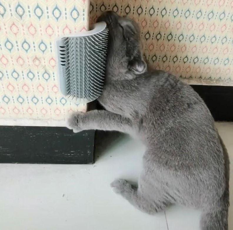 Imagem: Coçador massageador para gatos