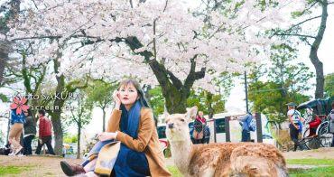【京都】奈良公園 和鹿一起看櫻花 春日大社 2017賞櫻景點推薦  4/9滿開