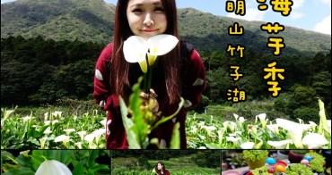 【台北士林】陽明山竹子湖海芋季 - 美美海芋田夢幻遊