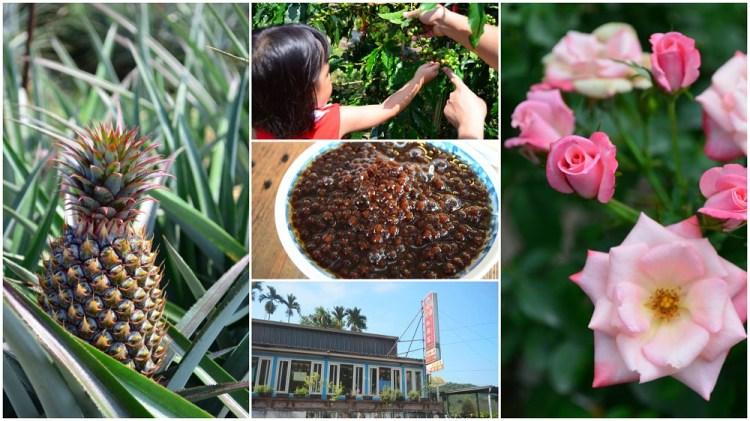 雲遊3林-城這邊 好食光│沉浸古坑咖啡香,DIY現採咖啡豆,品嘗當地特色風味餐~