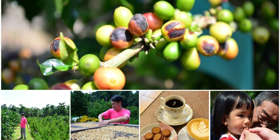 古坑景點_谷泉咖啡莊園│親自體驗採咖啡豆、烘焙咖啡、品嘗屬於自己的咖啡香~