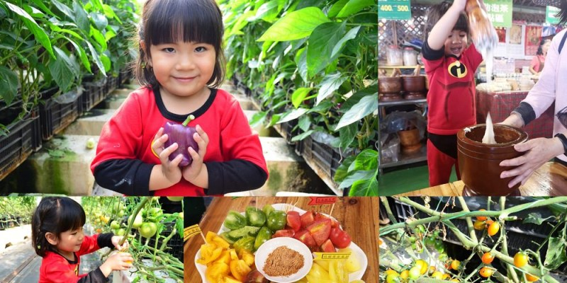金勇DIY番茄/休閒農場│新竹親子景點推薦,採番茄、甜椒、草莓外,還能親手搗麻糬~