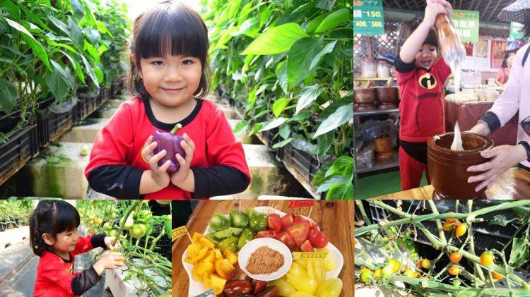 關西景點_金勇DIY番茄/休閒農場│新竹親子景點推薦,採番茄、甜椒、草莓外,還能親手搗麻糬~