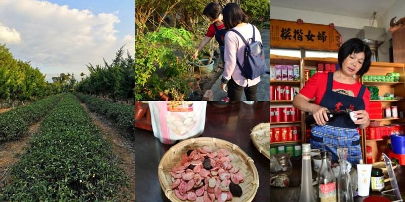 雲海休閒茶廠│新竹關西景點、新竹關西茶廠,生態導覽、茶葉沖泡,還有民宿可以入住喔~