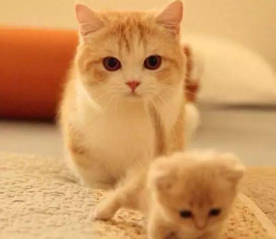 貓咪生了一隻貓寶寶,貓寶寶比貓媽媽還要軟萌-趣讀