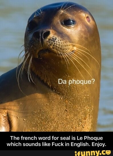 How To Say Seal In French Phoque : french, phoque, French, Phoque, Which, Sounds, English., Enjoy., IFunny