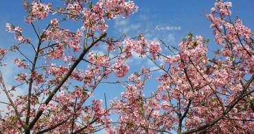 芬園櫻花季|彰化櫻花綻放,春遊芬園花卉園區,還能賞夜櫻,親子一日遊