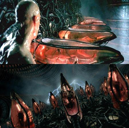 Matrix cultivo Más Allá de la Formación