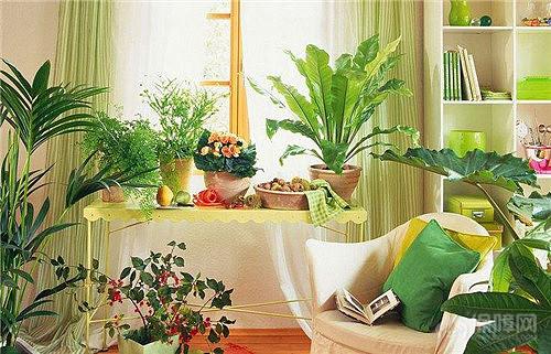 臥室植物擺放風水禁忌 適宜臥室擺放的植物有哪些 - 愛我窩