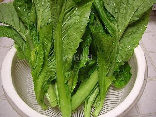 【圖】芥菜的醃制方法大全 吃芥菜絲有什麼好處 - 愛我窩