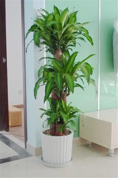 植物風水講究 19種旺家居風水植物 - 愛我窩